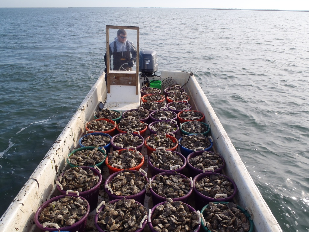 Photo courtesy: H.M. Terry Oyster Co.